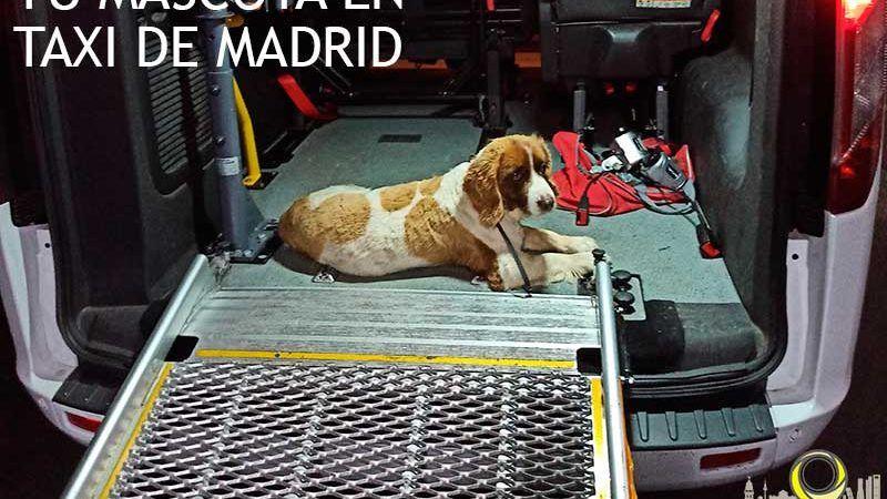MASCOTAS-EN-TAXI-DE-MADRID